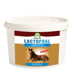 melk poeder veulen paard